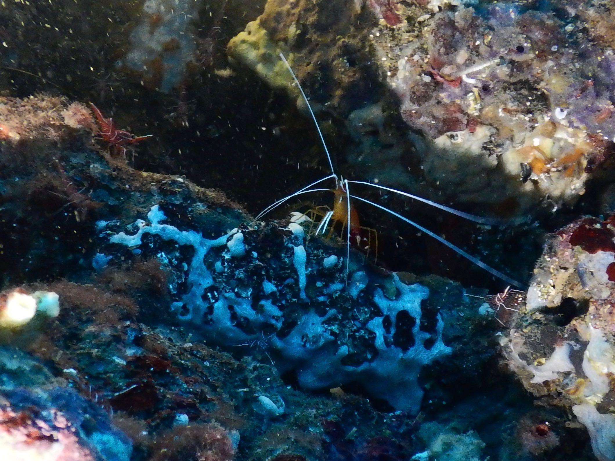 Flores, Akermi Dive resort (3).jpg
