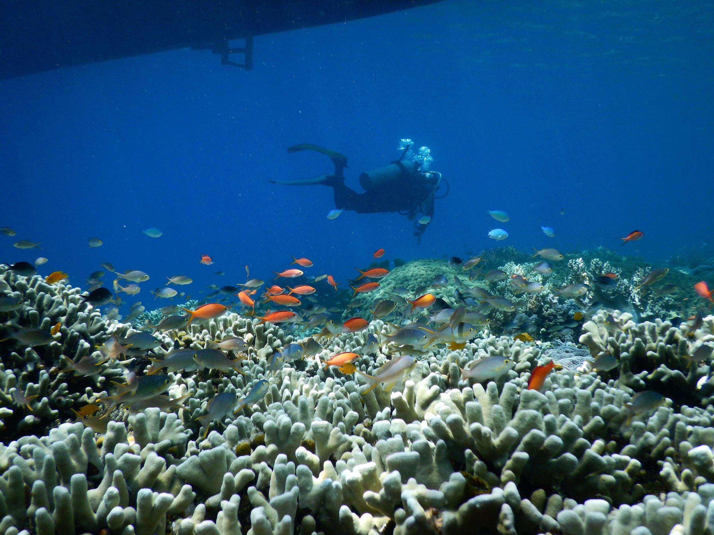 Flores, Akermi Dive resort (1).jpg
