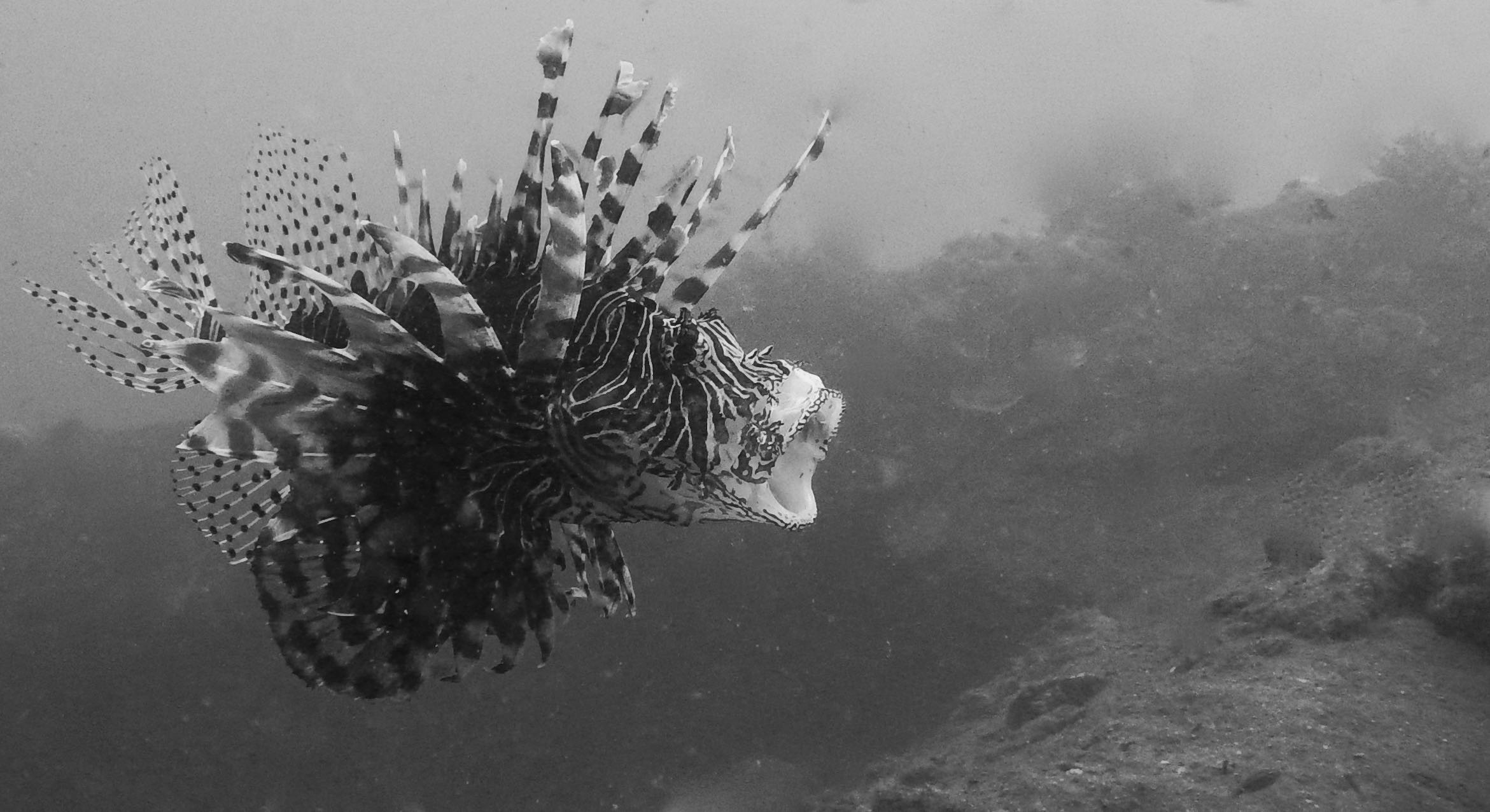 Flores, Akermi Dive resort (6).jpg