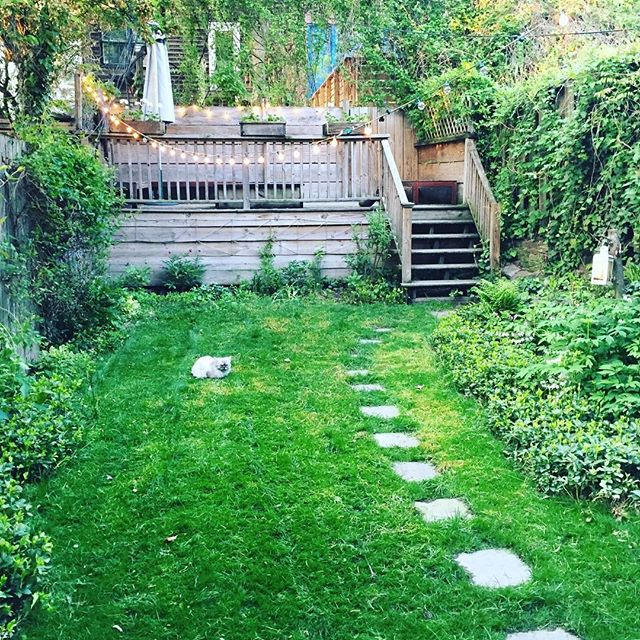 Loving this time of year!Yes Real Grass in Brooklyn!  Every year once it warms up I can prep my little piece of grass. It's a lot of hard work but very satisfying when it starts to grow! I know people think I'm crazy .. even my Mum. But by May !!💕 wow! #theresnothinglikerealgrassinNYC