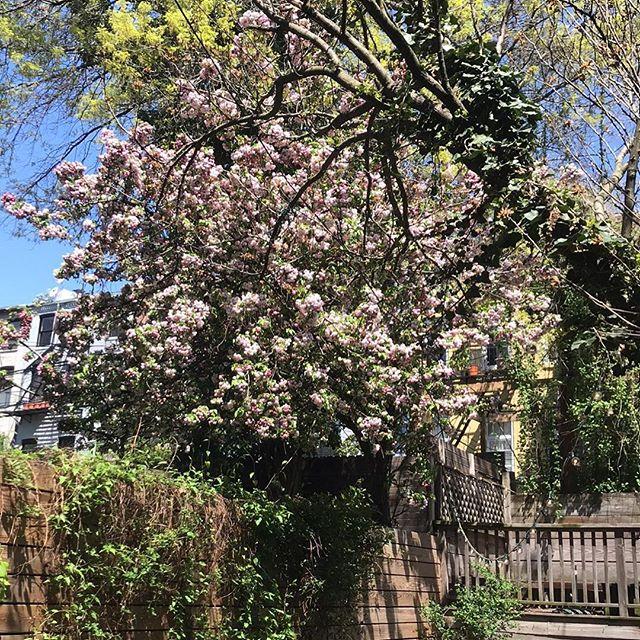 Boerum Hill in April!! 🌸💕