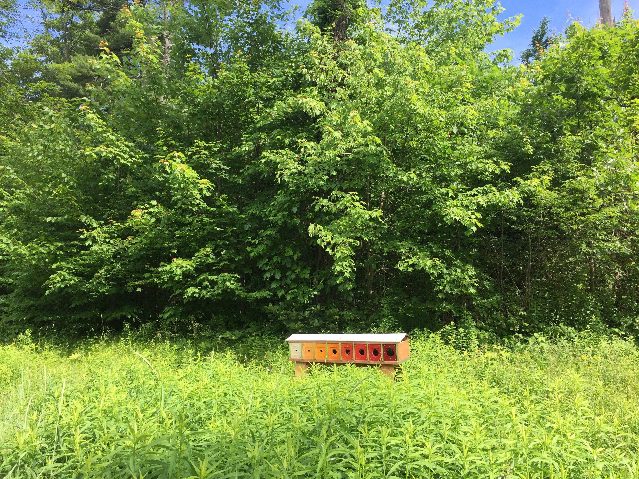 David Buckley Borden Harvard Forest