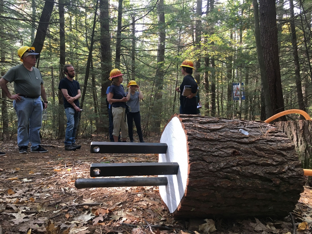 """A tour of  Hemlock Hospice led by proctor Jill Fusco, with """"Bio Resource Plug"""" (2017) (courtesy Harvard Forest Archives, Harvard University, photo by Neil Pederson)"""