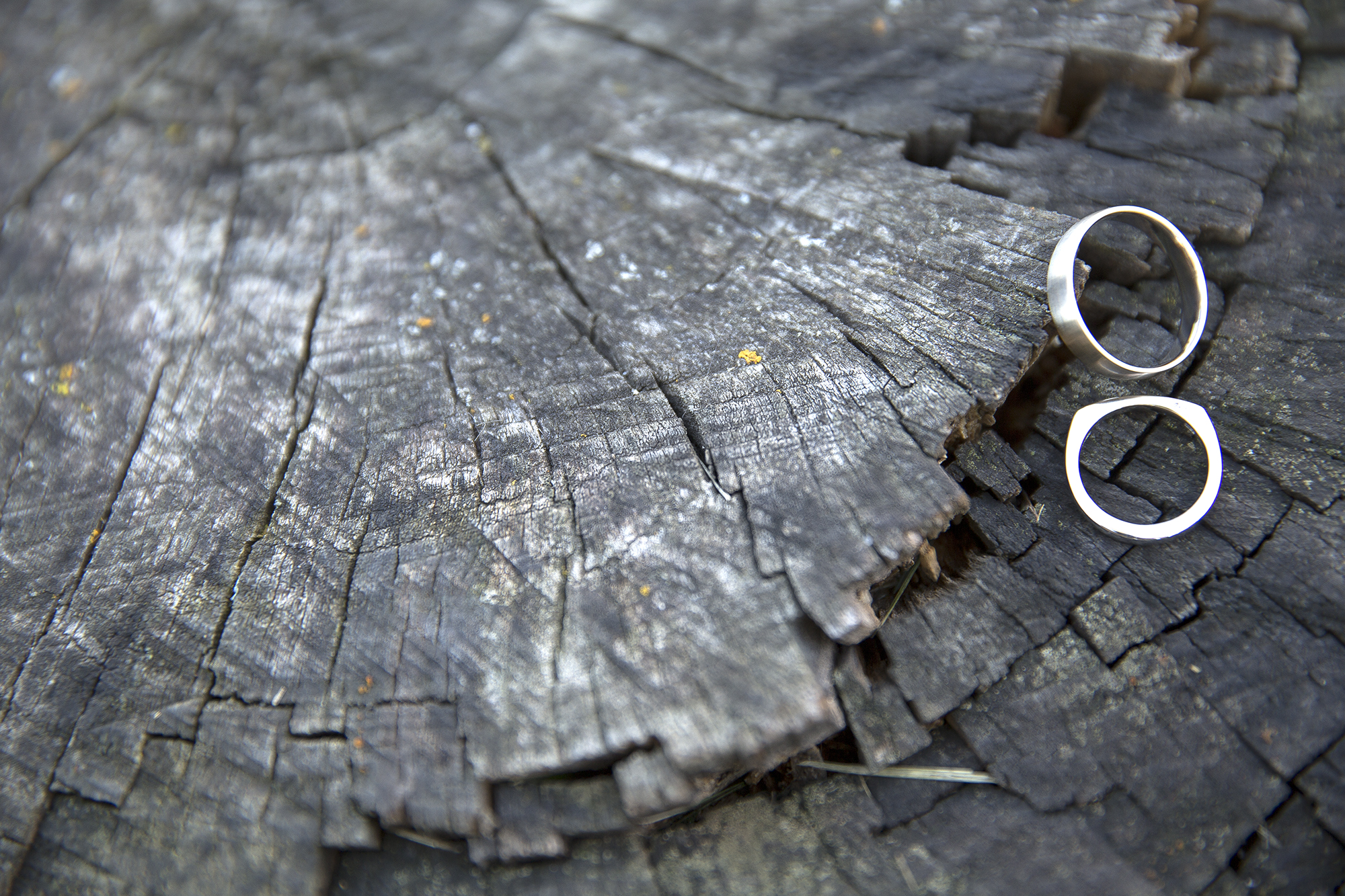 rings on a log.jpg