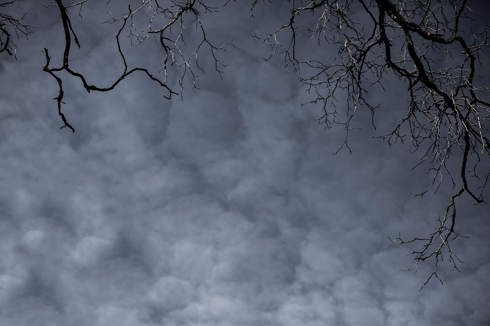 weather wax tree branch #2.jpg