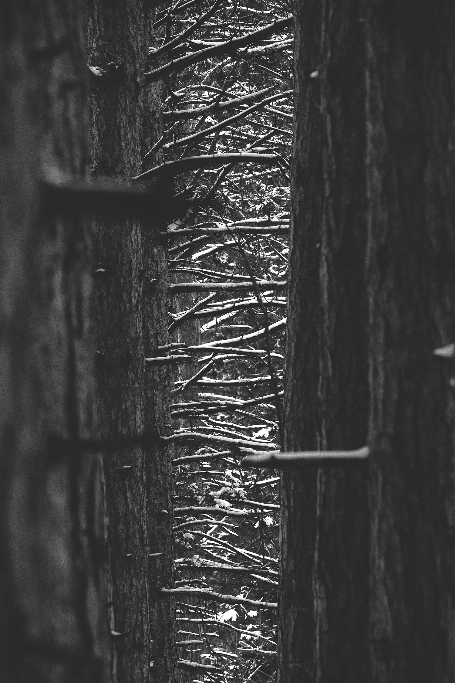 in the pines.jpg