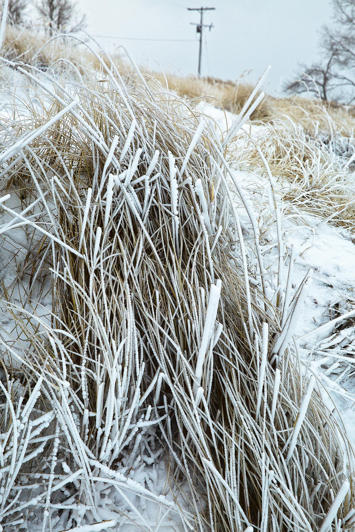 point betsie frozen dunegrass#1.jpg