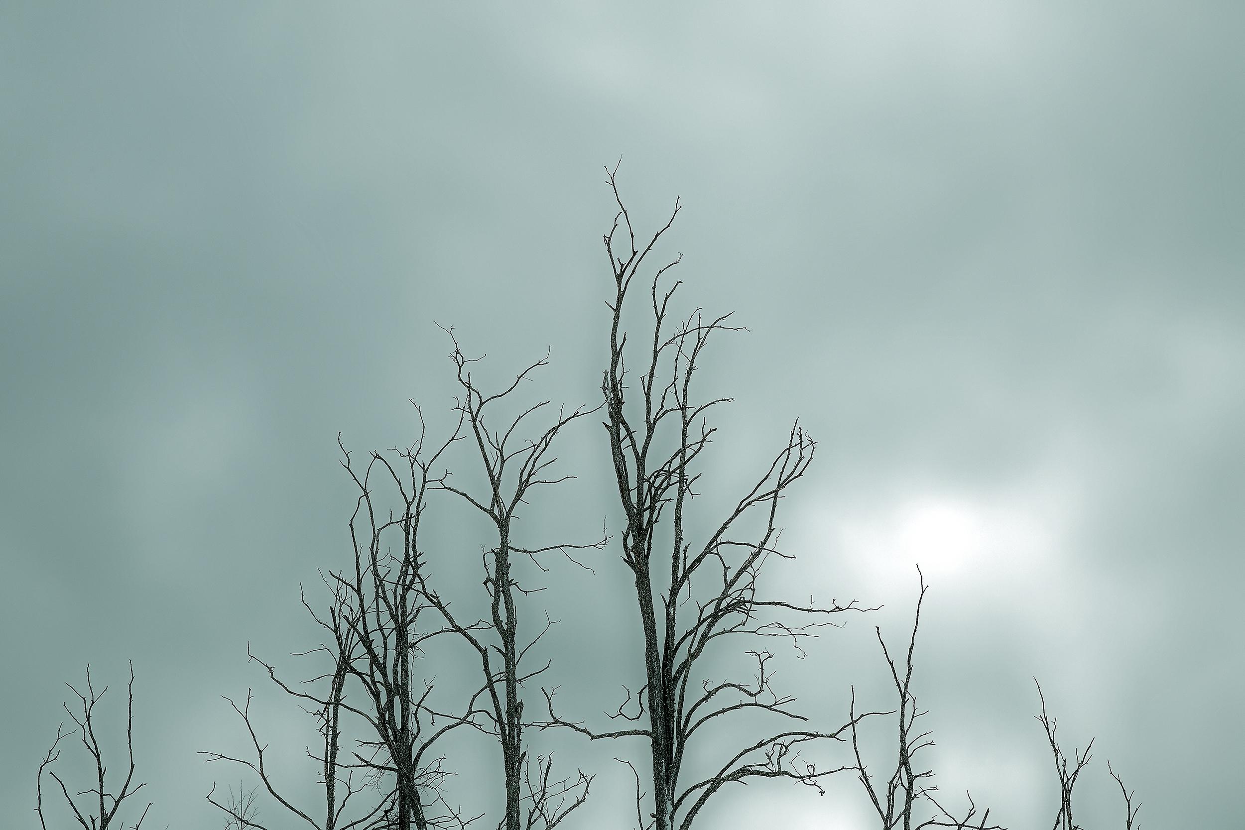 esch tree top.jpg