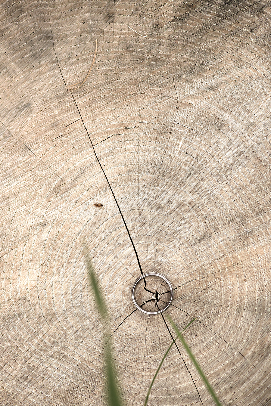 ring stump(WEB).jpg