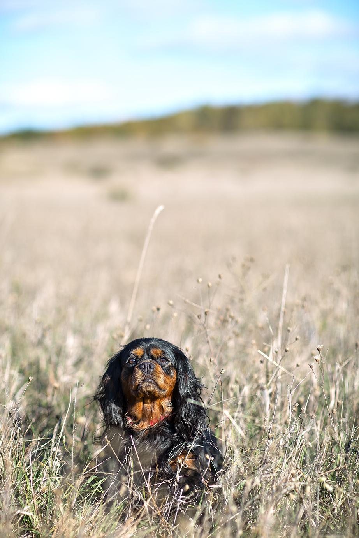 pup field#1(PROOF).jpg