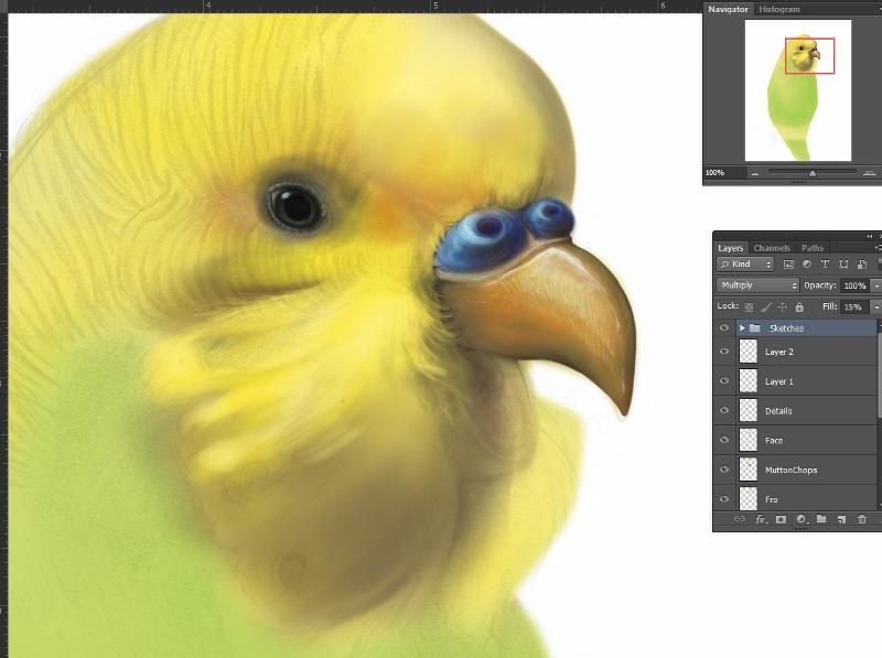 Budgerigar Project made using Photoshop CS6.