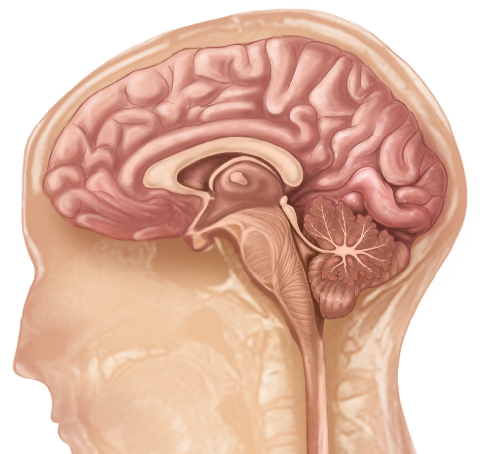 brain24f