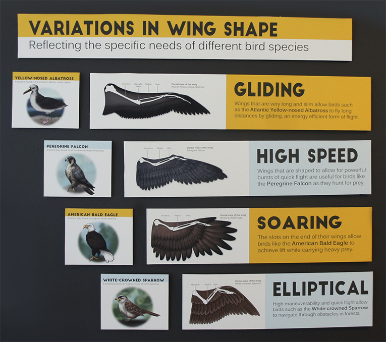 WingShapes.jpg