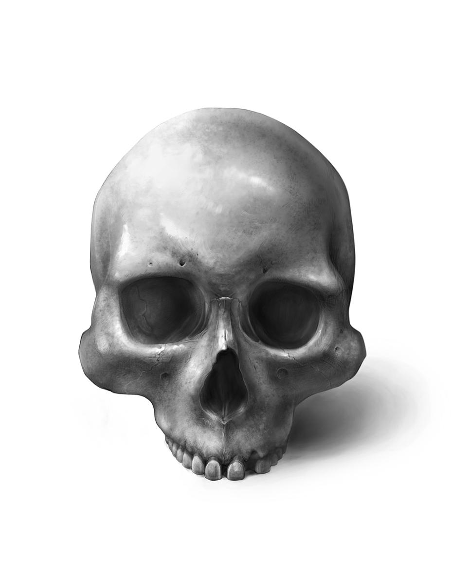 Homo sapiens: Eskimo Skull
