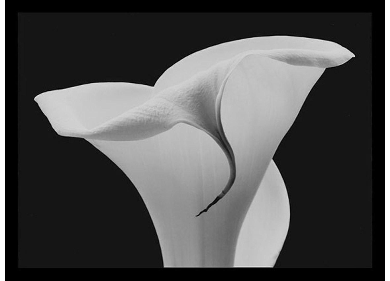 Rondal Partridge