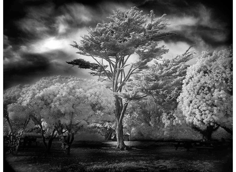 Mitch-Dobrowner_Wind-Swept-Tree.jpg