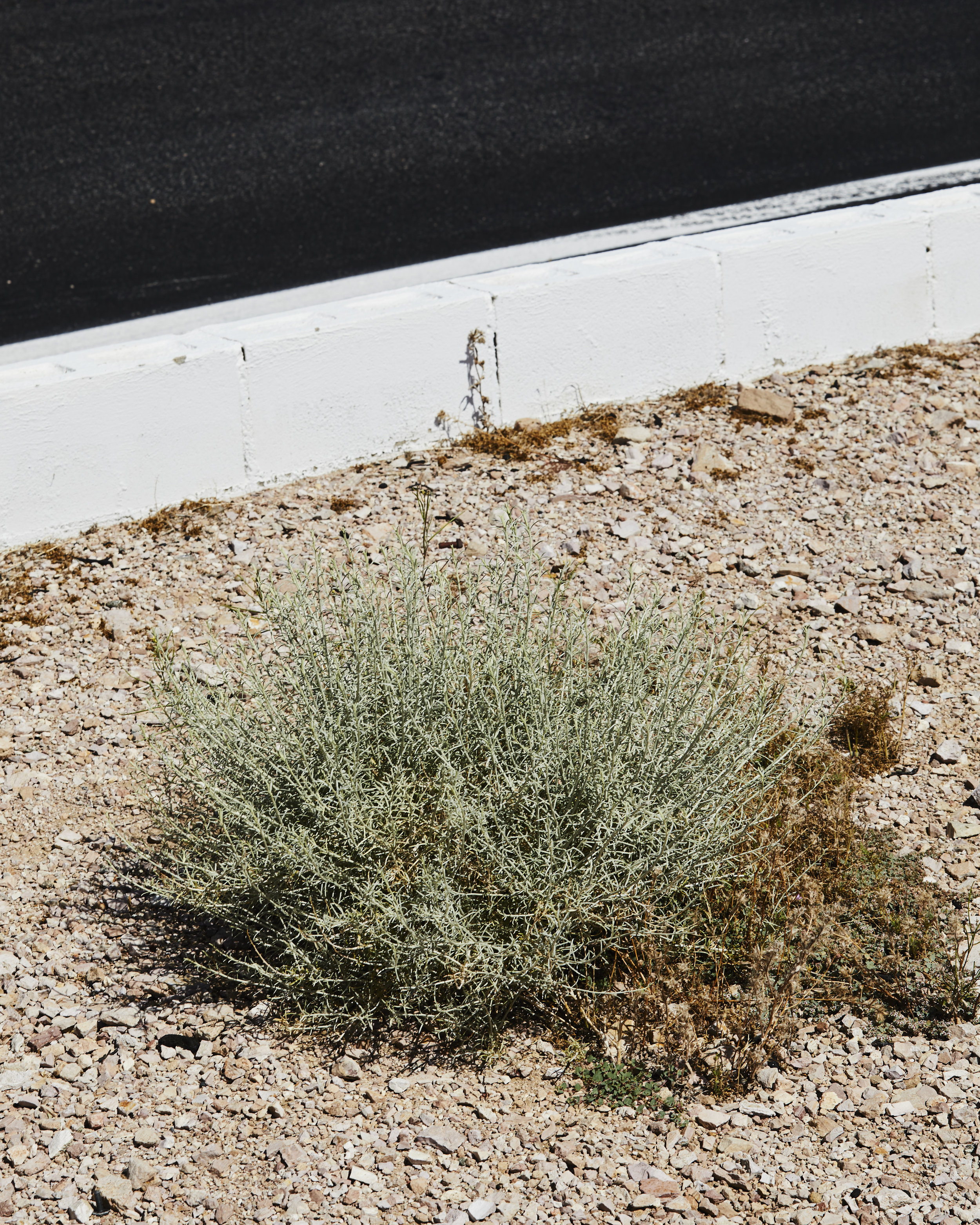 Willow_Springs_0485.jpg