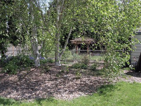 Oregon-grape, birches, shrubs, annuals (2009)