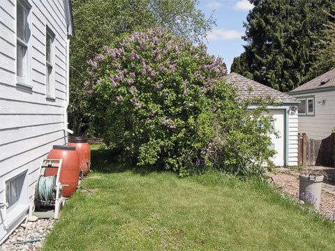 Lilacs (2009)