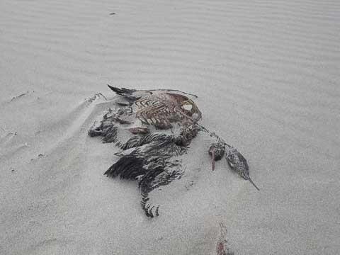 Dead on the Beach