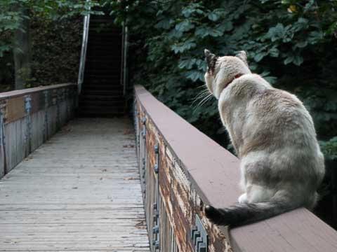 Watchcat