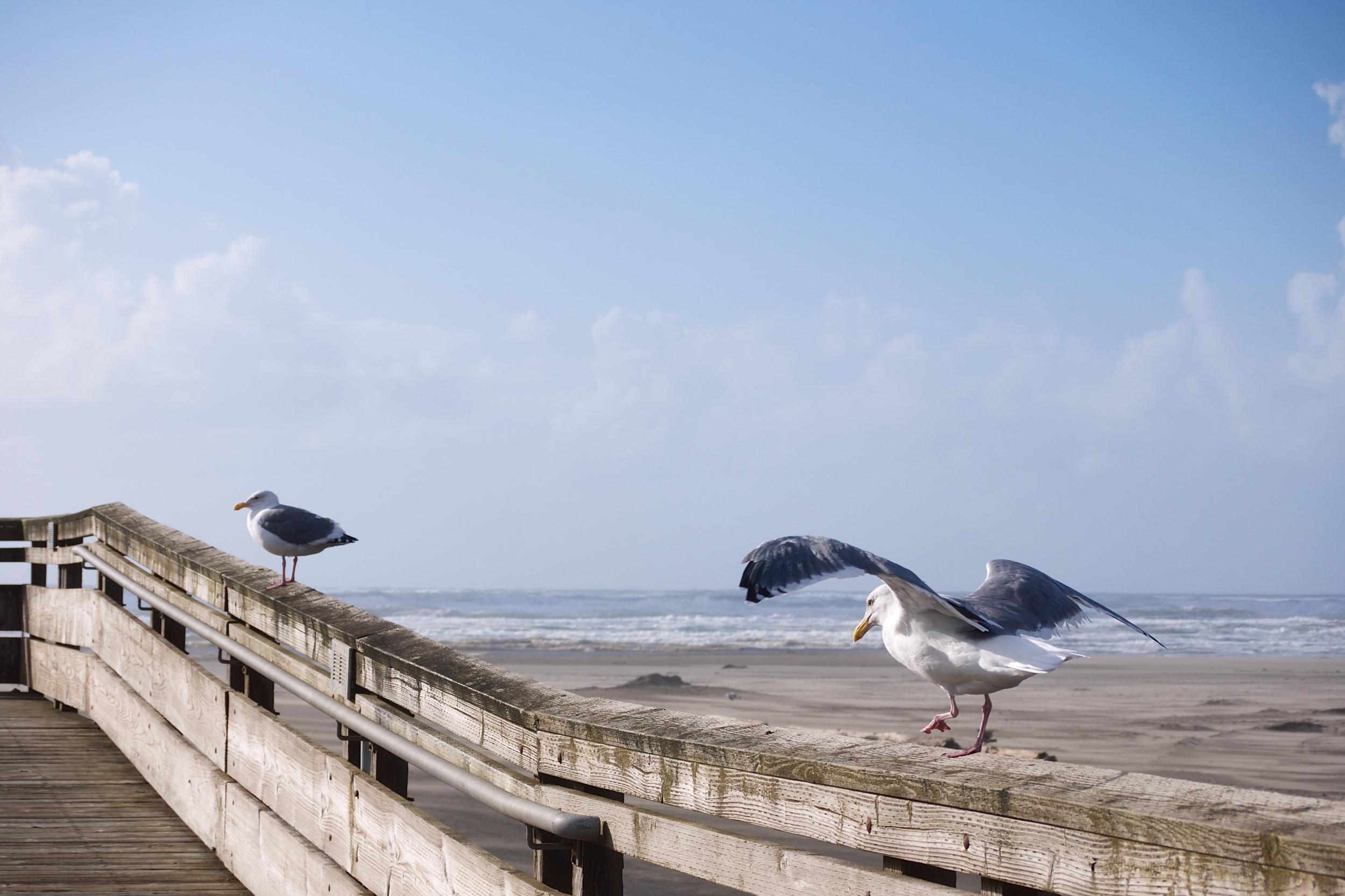 Boardwalk at Long Beach, WA