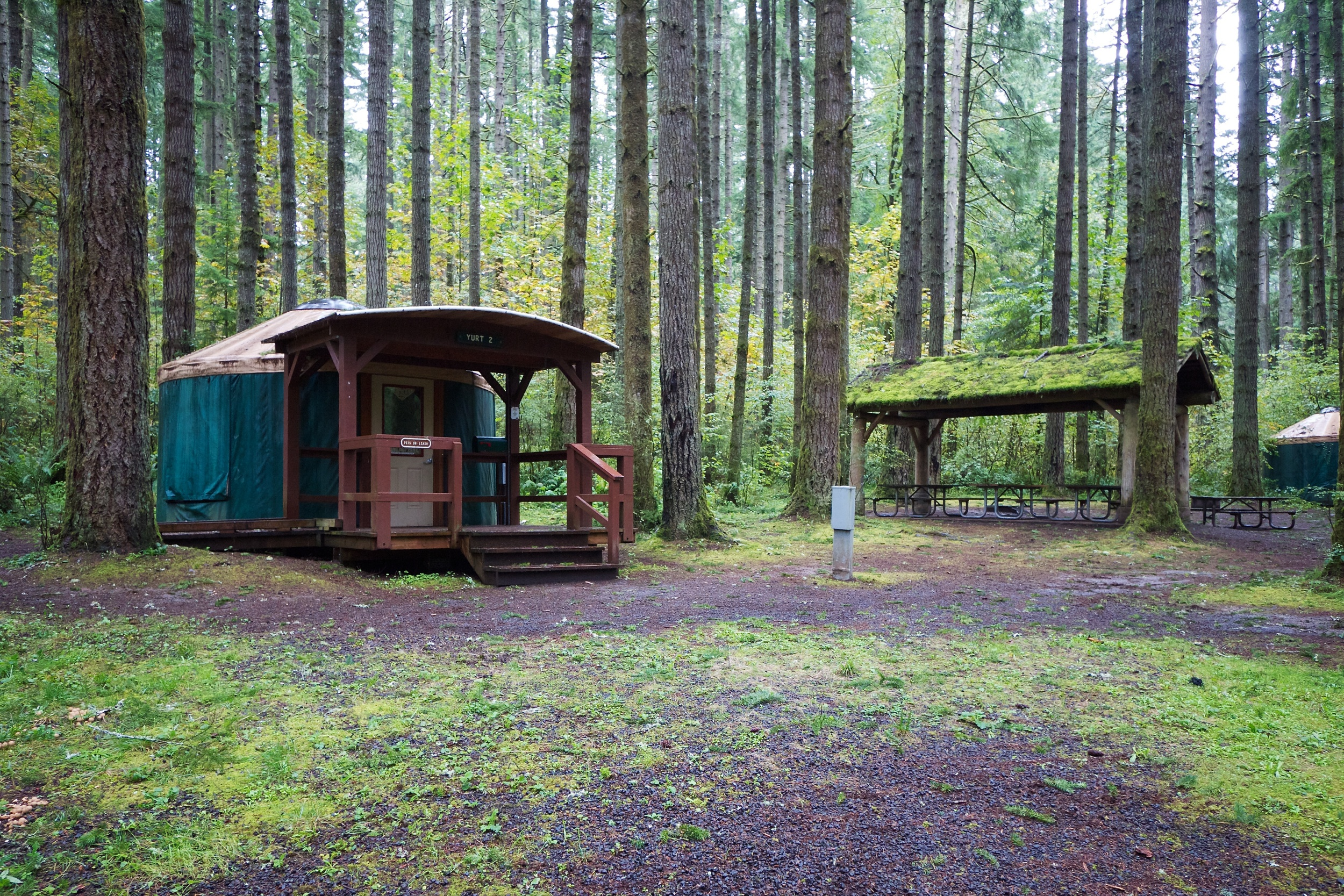 Yurts at Seaquest State Park