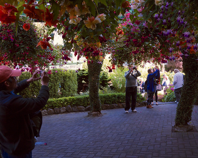 The fuchsias were popular with the photographers