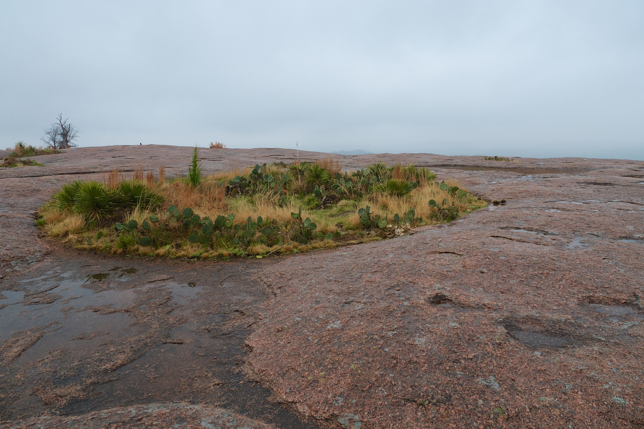 Cactus patch on Enchanted Rock
