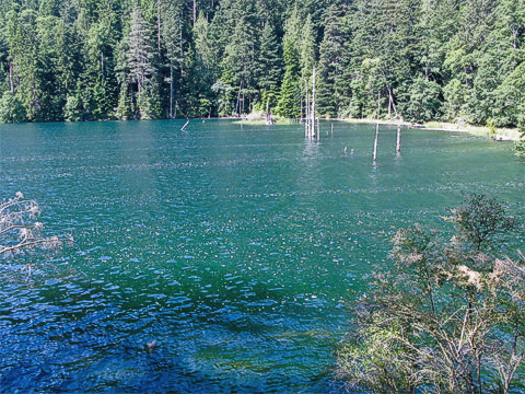 The north end of the lake has these bubbles in perfect rows.