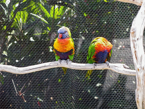 There are a lot of lorikeets in the exhibit, and you can feed them too.