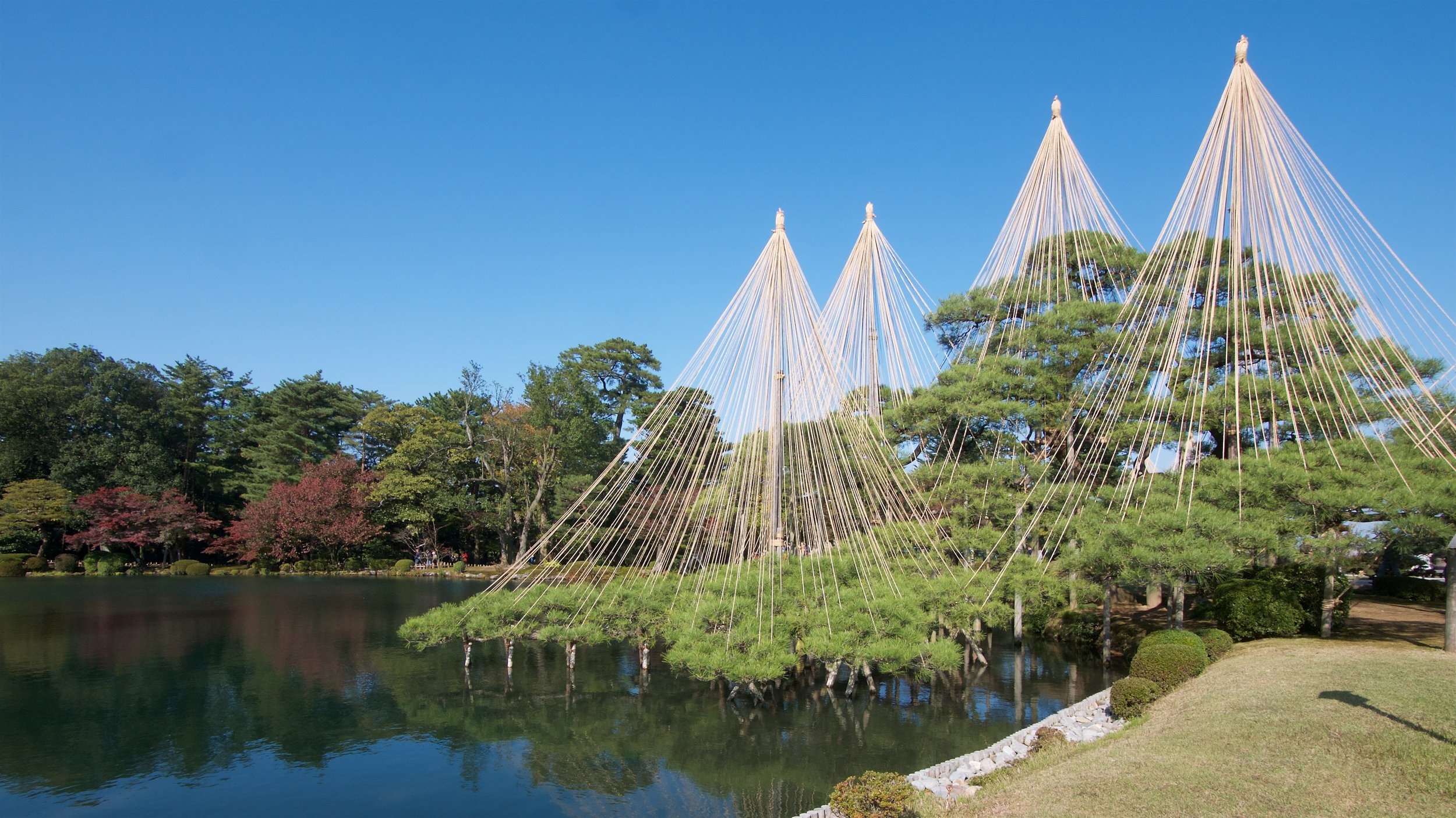 Trees supported by ropes and poles