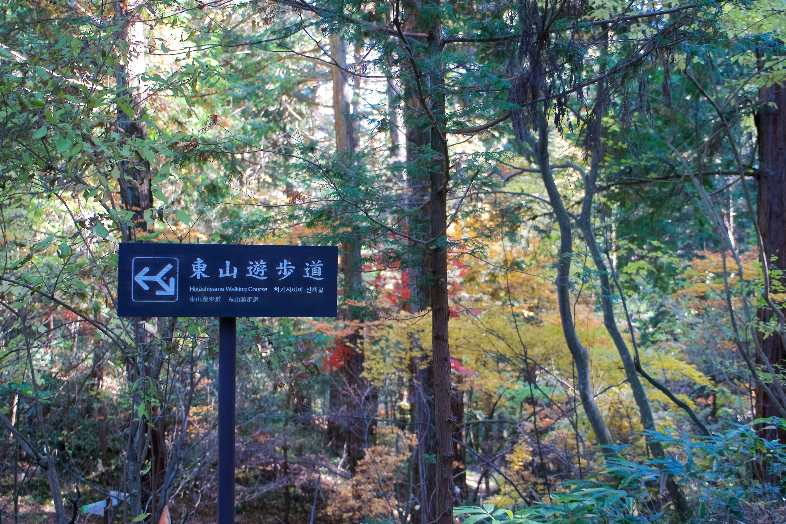 Higashiyama Walking Course sign (the line pointing up is a path which you don't take, and the arrows are paths you take, depending on which direction you're doing the course