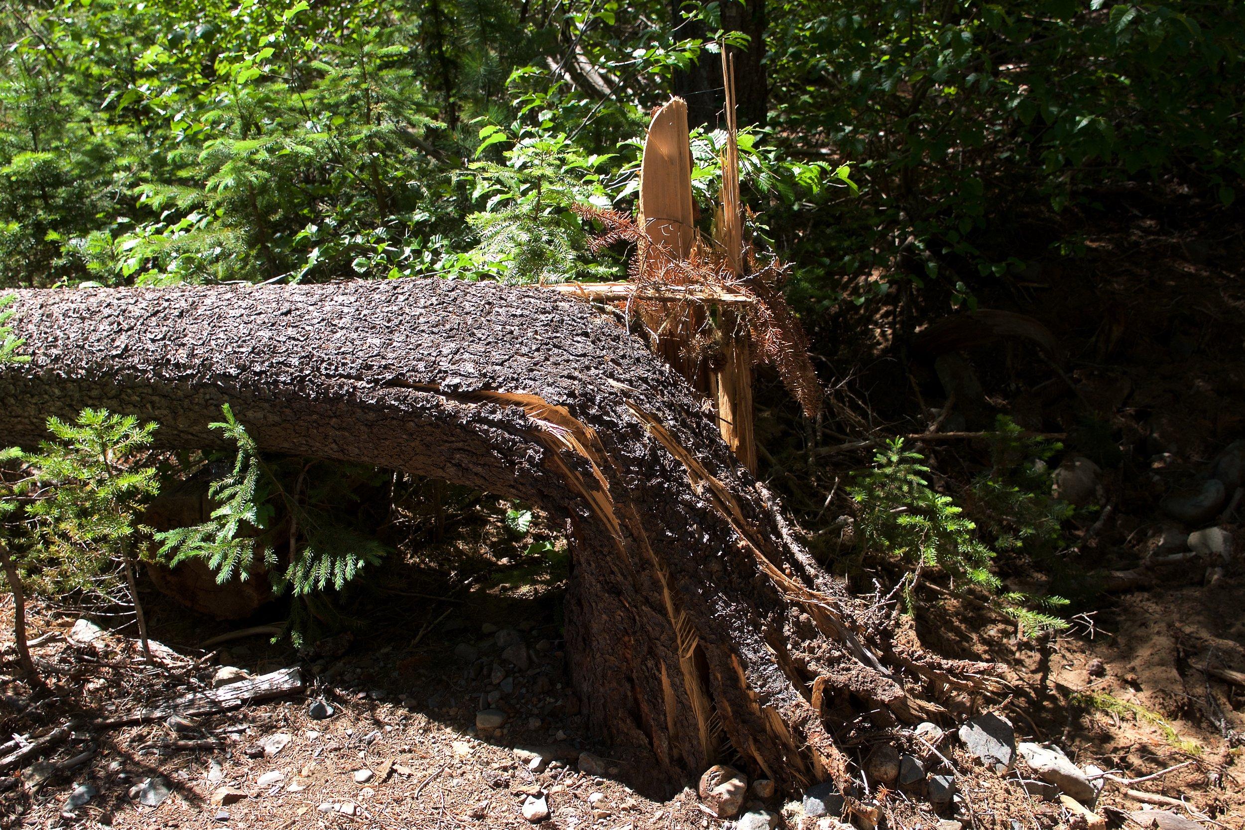 We came across almost three dozen trees fallen across the trail