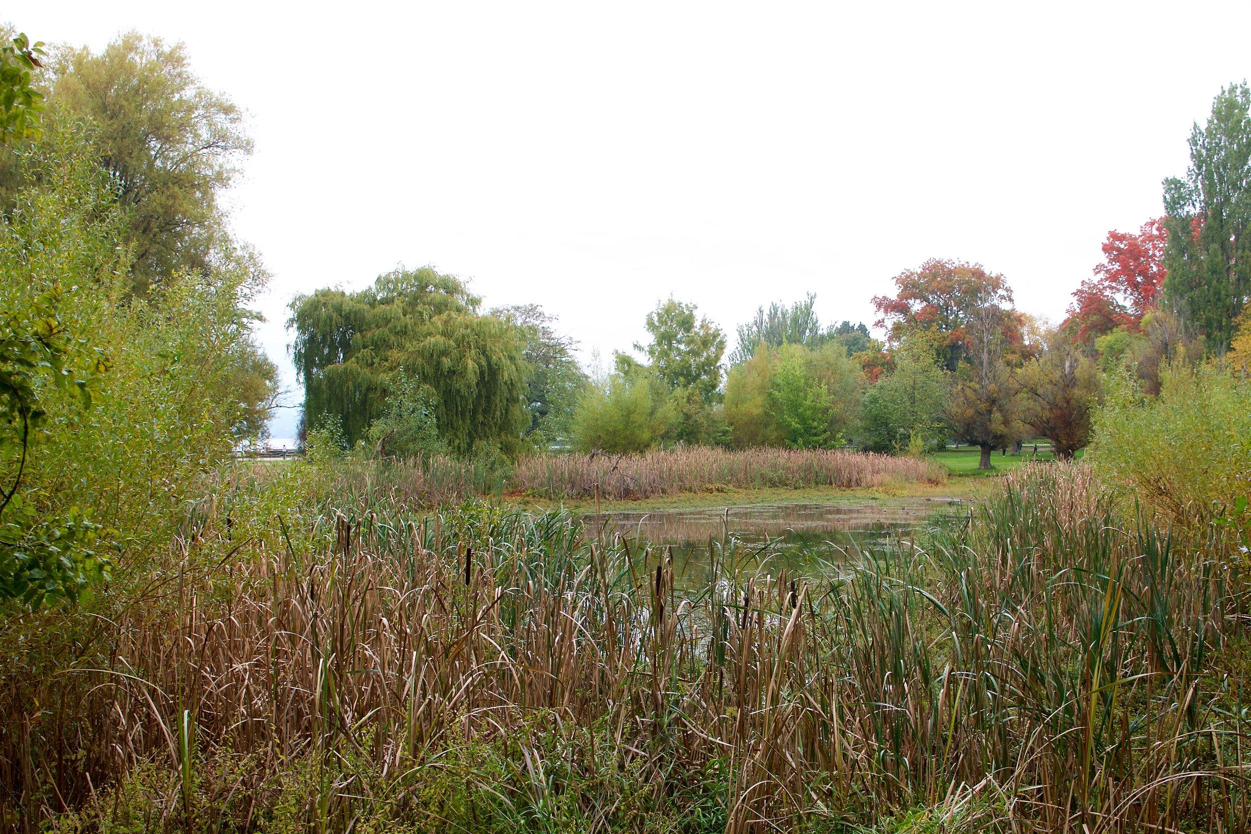 Duck Pond at Jerico Beach Park