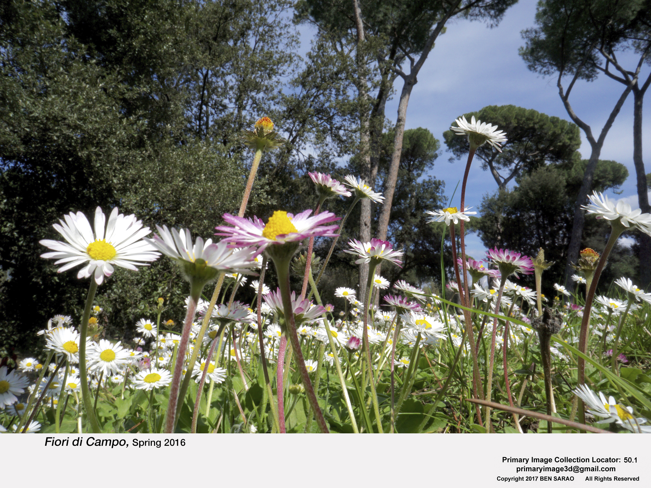 10.I. Field Flowers.jpg
