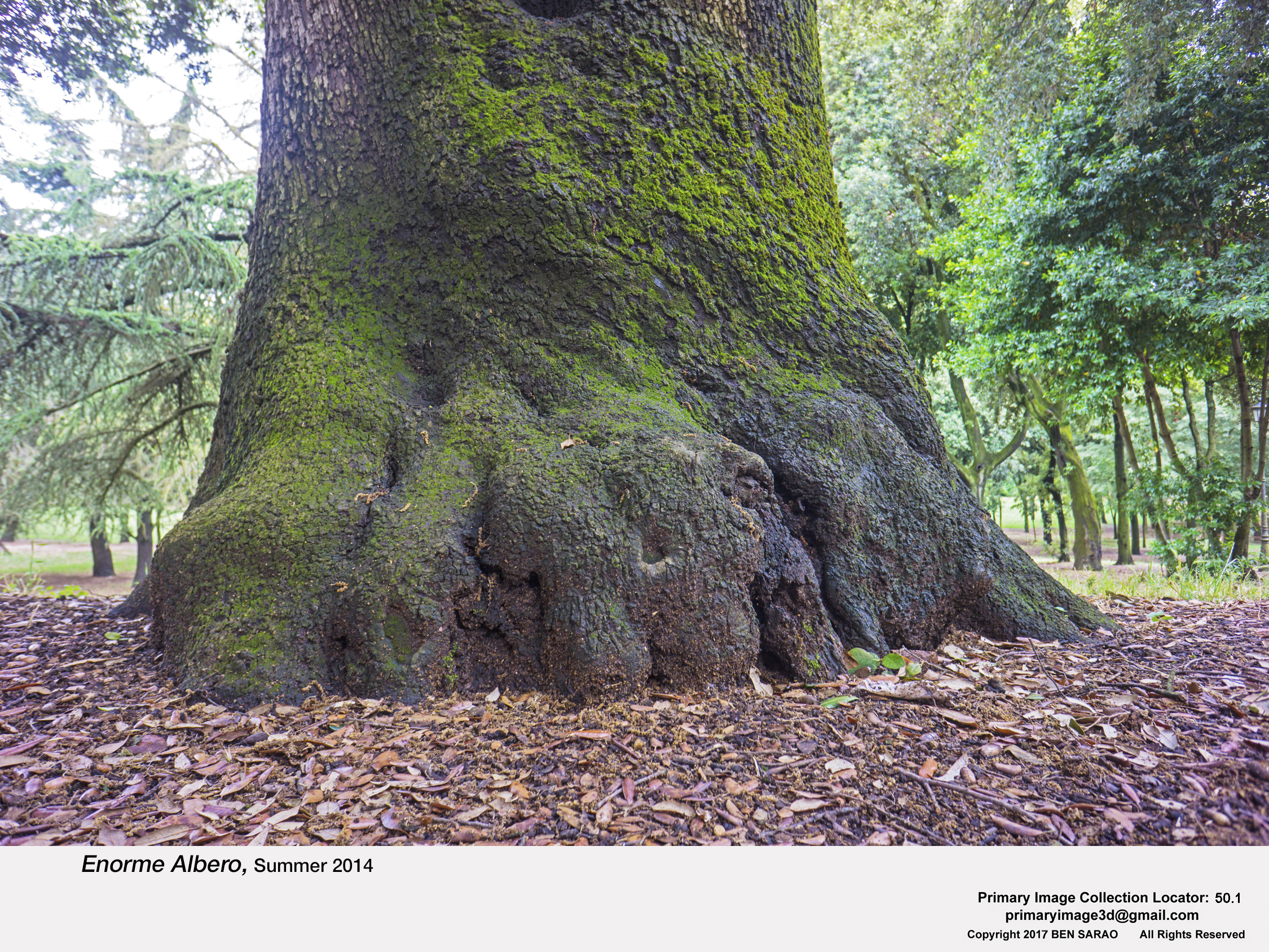15.I. Tree Base.jpg