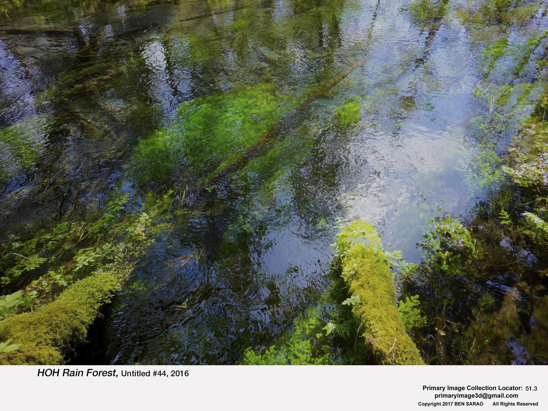 1. HOH Rain Forest 44.jpg