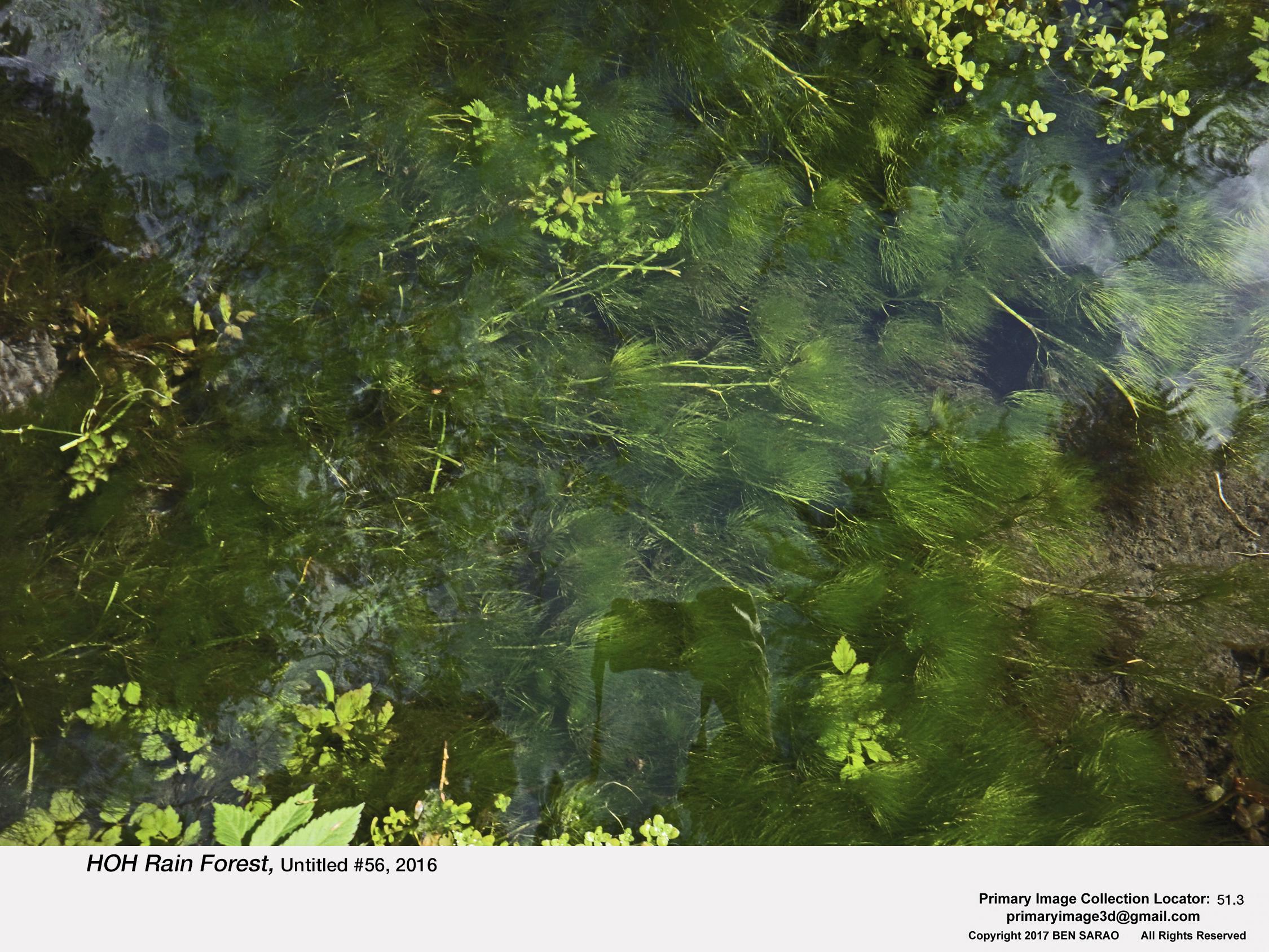 5. HOH Rain Forest 56.jpg