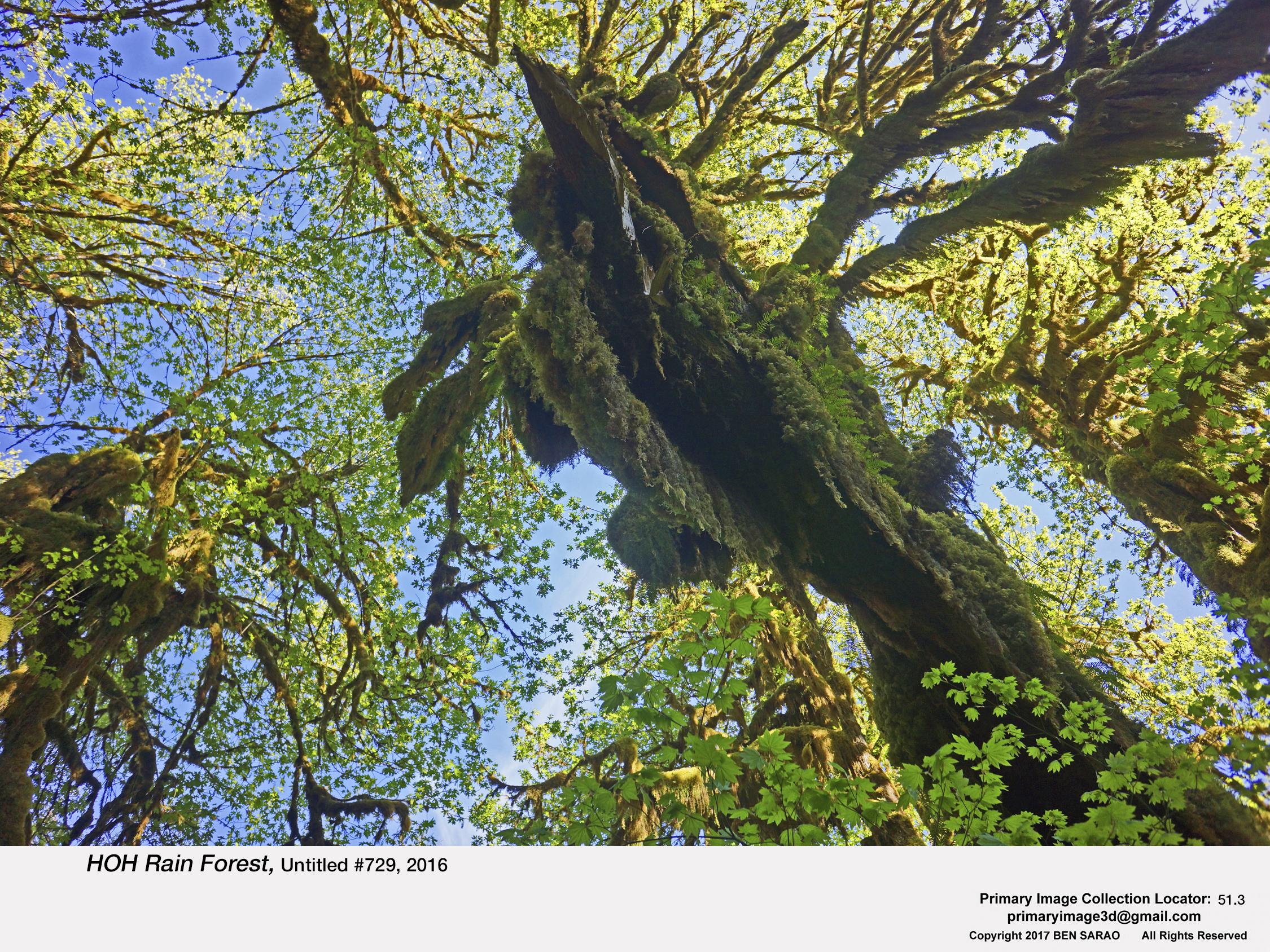 6. HOH Rain Forest 729.jpg