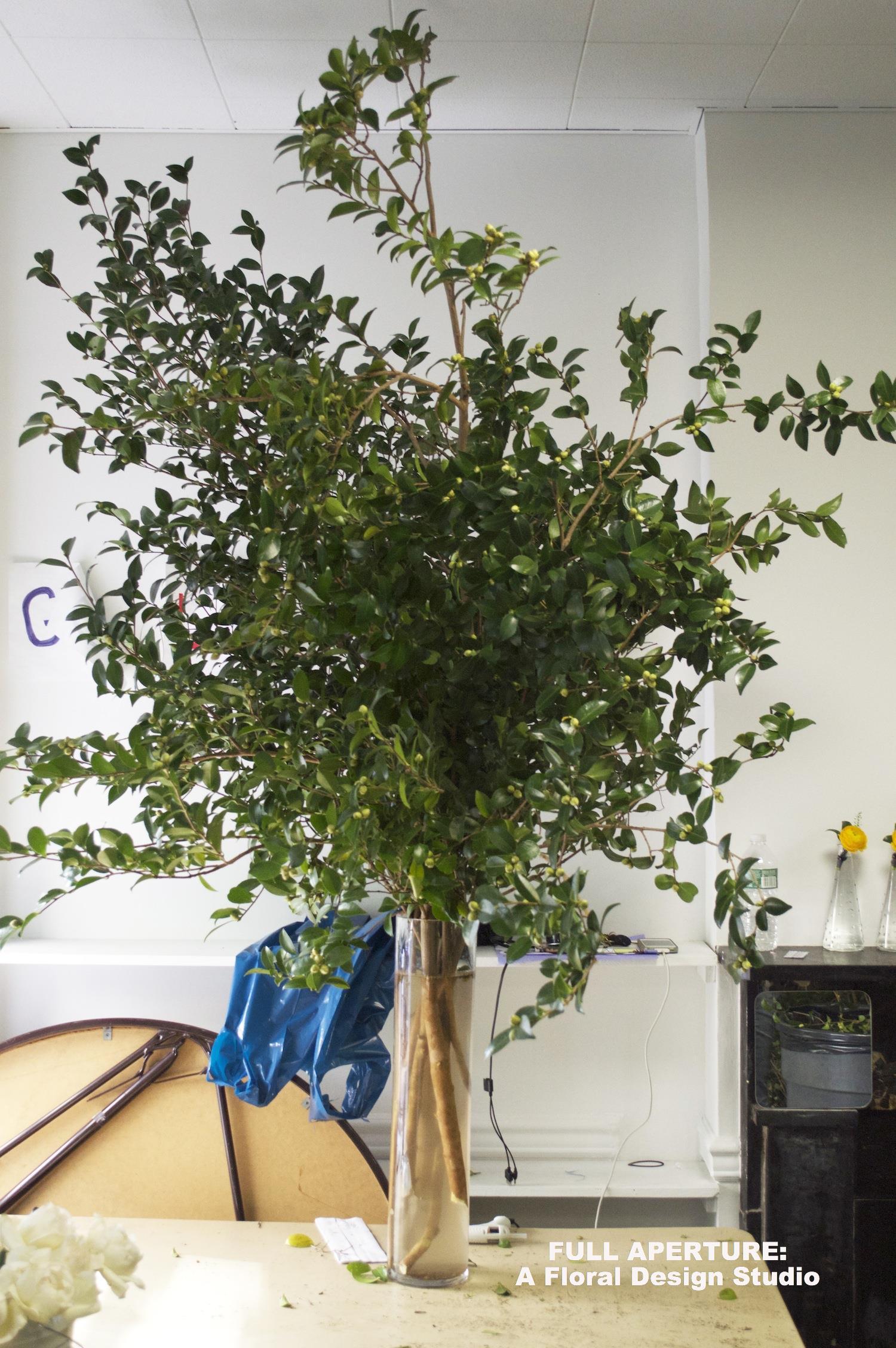 Branch Preview Full Aperture Floral Design.jpg