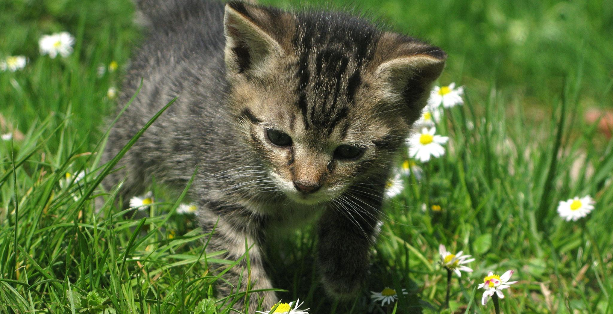 kittens-bg.jpg