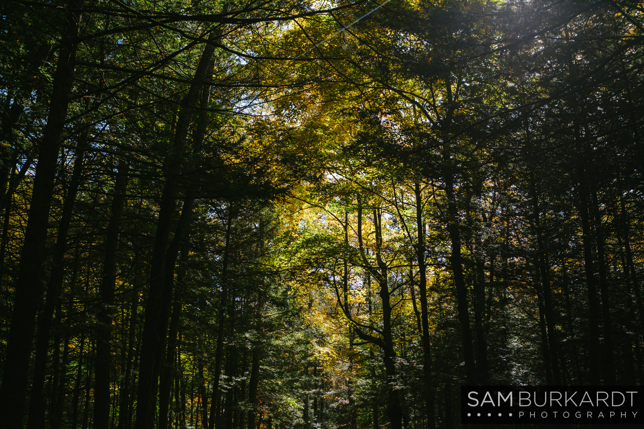 samburkardt-fall-engagement-connecticut-hike-nature_0031.jpg