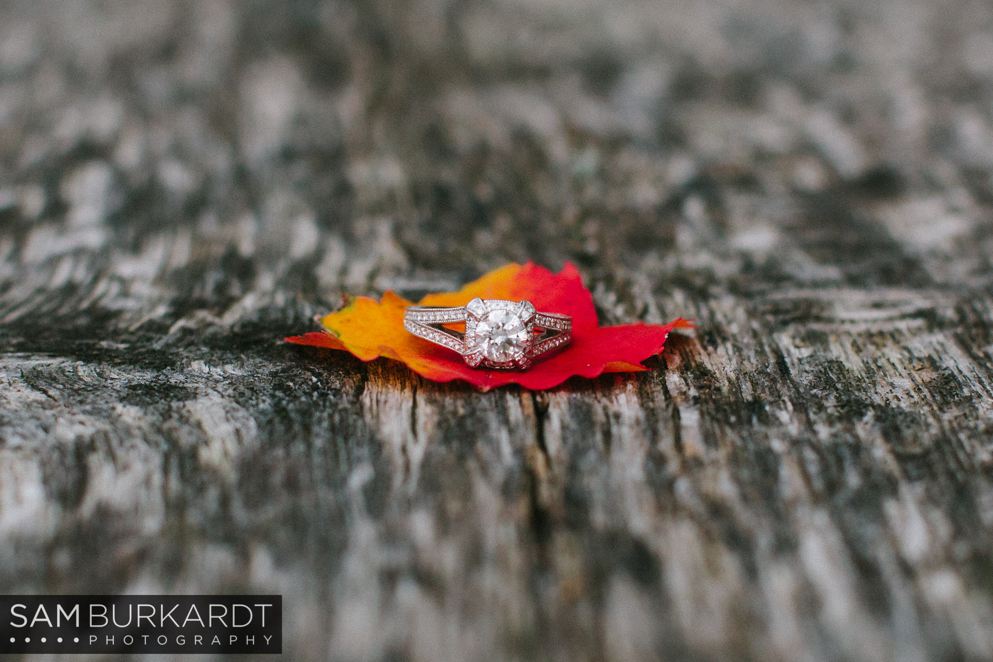 samburkardt-fall-engagement-connecticut-foliage-southford-falls-state-park_0013.jpg