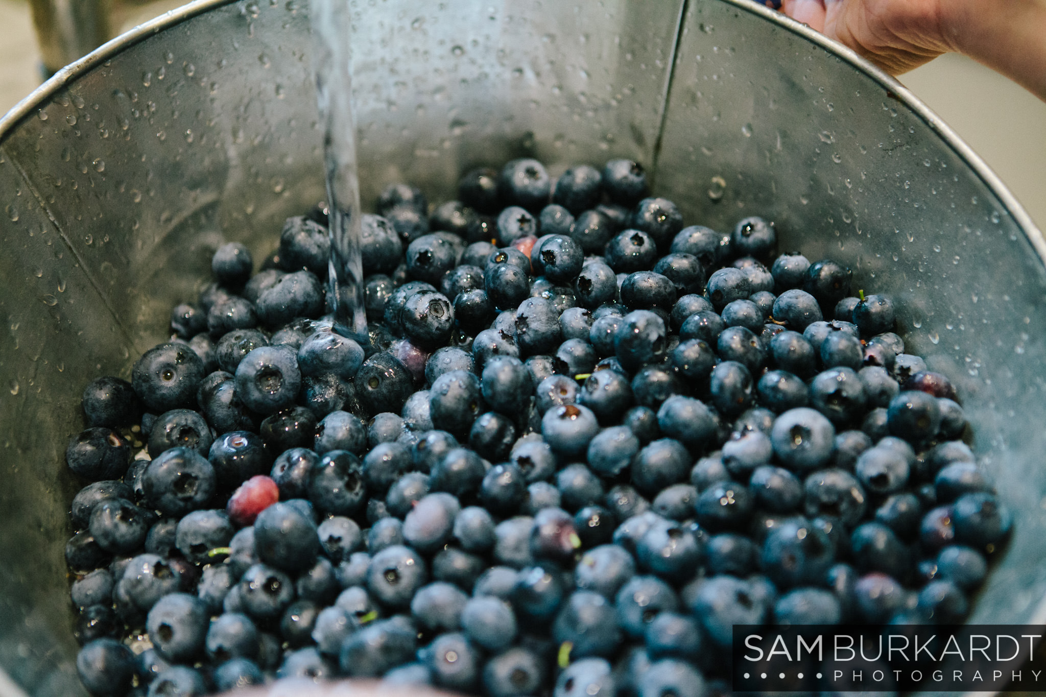 samburkardt_blueberries_kent_connecticut_015.jpg