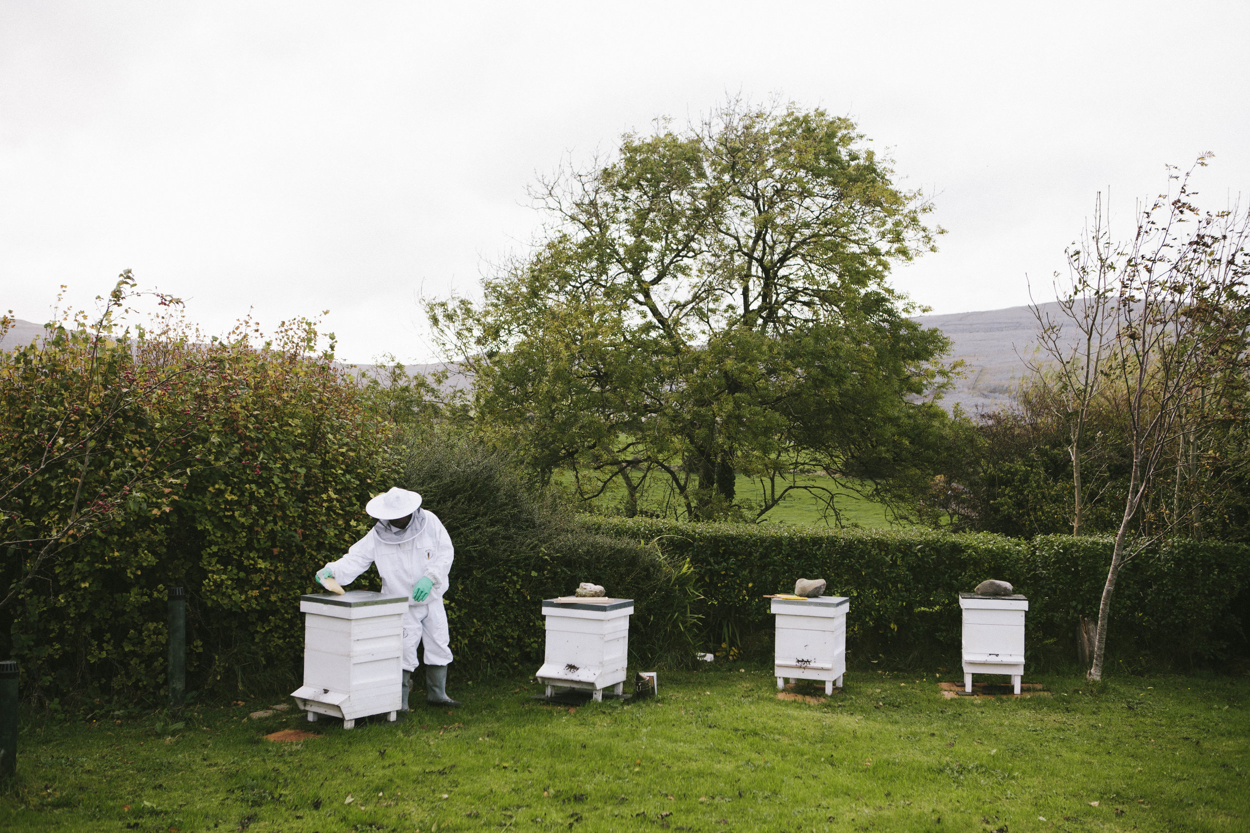 airbnb_burren_ireland_travel_portrait_photography_bees