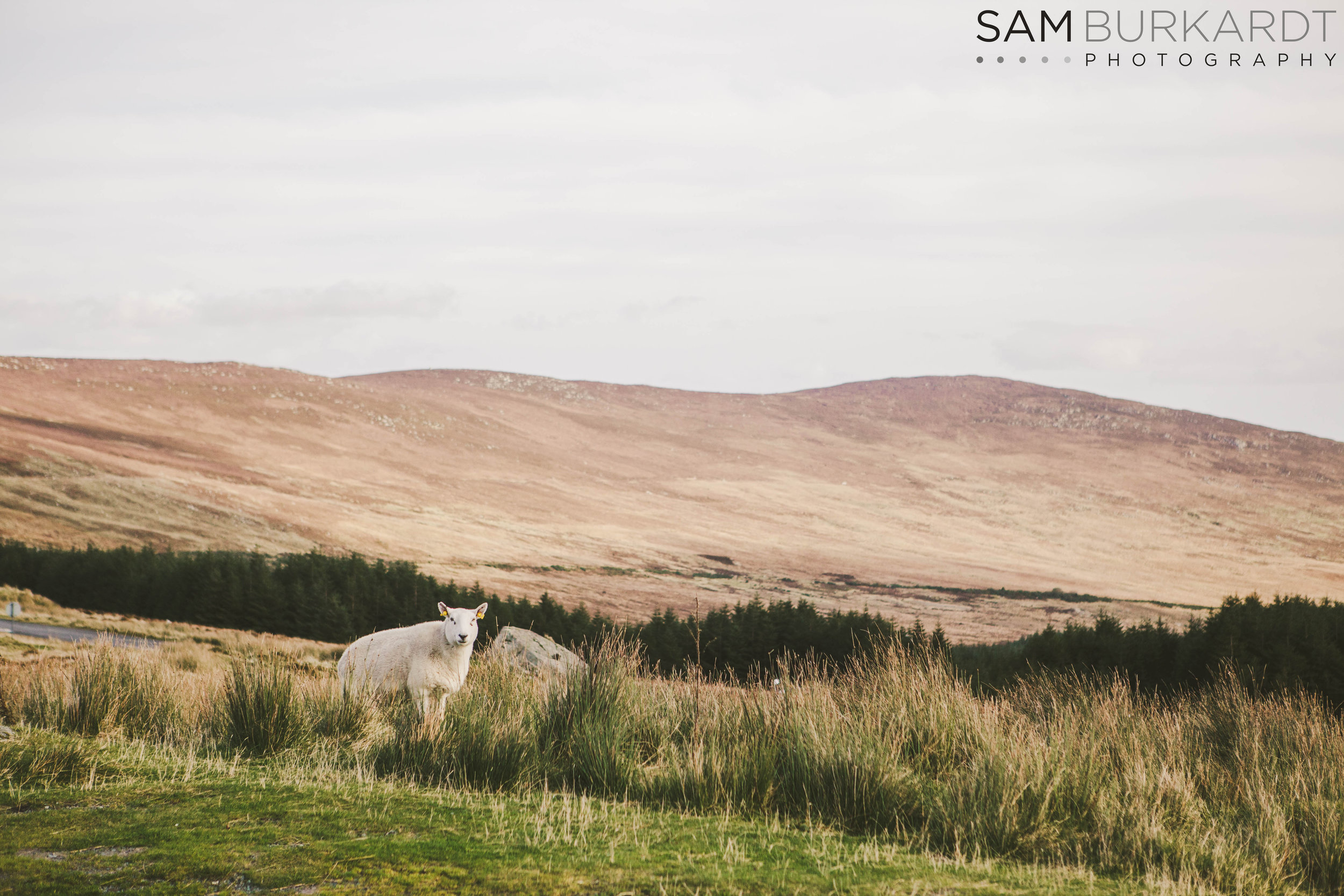 wicklow_mountains_sheep_trail_hike_ireland_photography