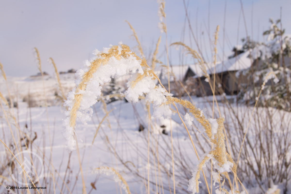 © 2015 Louise Levergneux, December in Avimor, Idaho