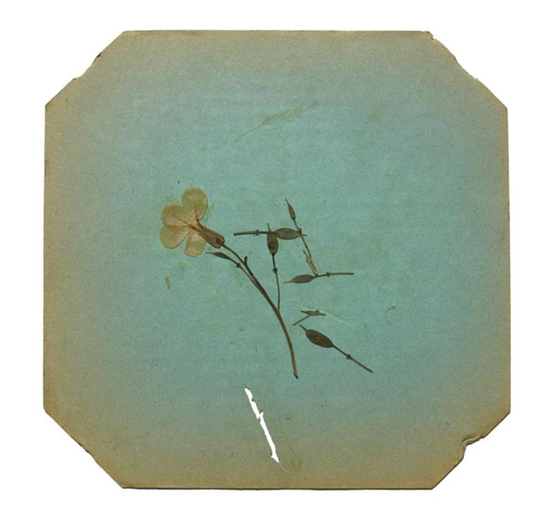 © 2013 Vera Greenwood,Flower Press 1