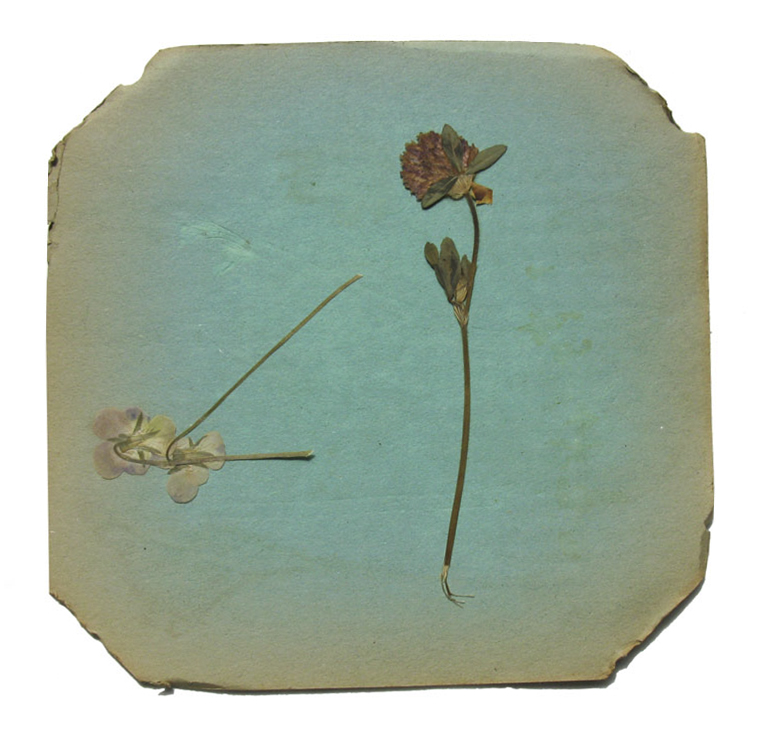 © 2013 Vera Greenwood,Flower Press 3